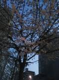 17-03-20-05-38-04-884_photo.jpg