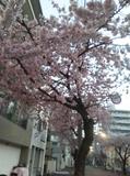 17-03-24-05-38-51-787_photo.jpg